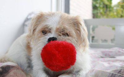 Je hond herhaaldelijk achter een bal aan laten rennen… Wat doet dit fysiek en mentaal met hem?
