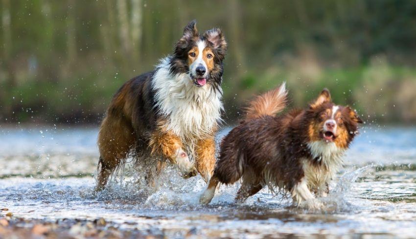 Stel… een familielid of vriendin krijgt een hond. Hoe kan je de honden nu op een fijne manier met elkaar laten kennismaken?