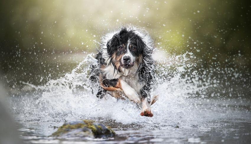 Hoe leer je je hond een betrouwbare recall aan (het bij je terugkomen als hij losloopt)? Volg deze stappen!