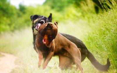 Wat te doen als je hond ergens ontzettend van geschrokken is tijdens de wandeling en hij nu niet meer relaxt buiten loopt?