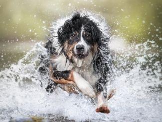 Online cursus overprikkeling hond
