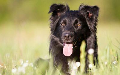 Trap nou niet in de valkuil om direct veel teveel te verwachten van jouw herplaatshond.