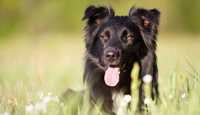 Herplaatser hond wennen