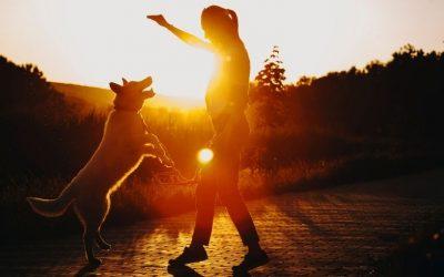 Waarom iedere hondeneigenaar zou moeten weten wat Counterconditionering en Desensitisatie betekenen.