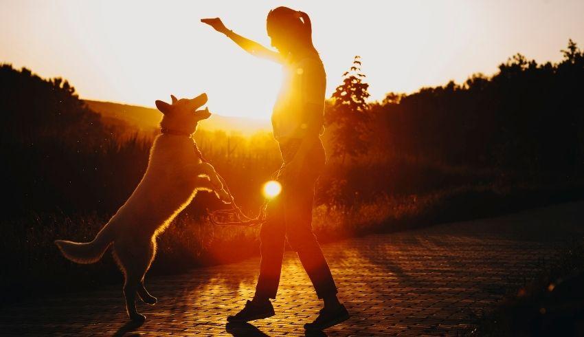 Hond trainen Counterconditionering en Desensitisatie