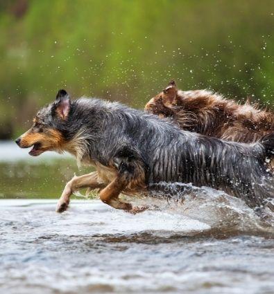 Hond overprikkeld