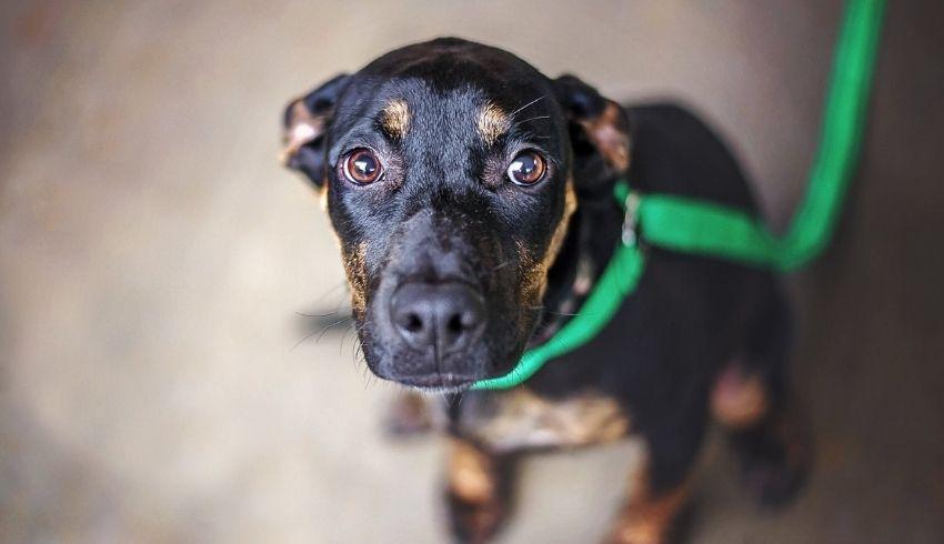 Als je hond geschrokken is, moet je het dan positief afsluiten? Of beter zo snel mogelijk naar huis met je hond?