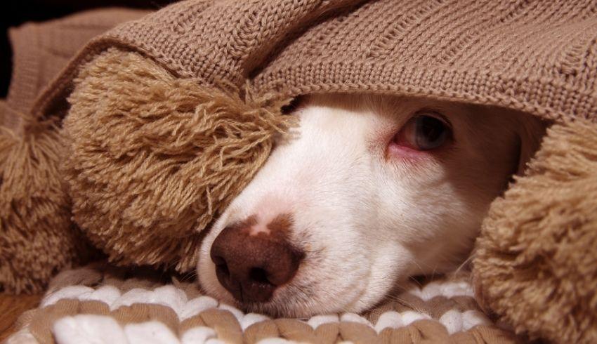 Merk jij ook ineens een gedragsverandering bij je hond? Honden kunnen bijzondere verbanden leggen.