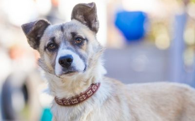 De hond eerst in een opvanggezin of beter direct adopteren vanuit het buitenland?