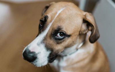 """Bij verlatingsangst is het belangrijk dat je hond """"under threshold"""" blijft. Maar wat betekent dit nu precies?"""