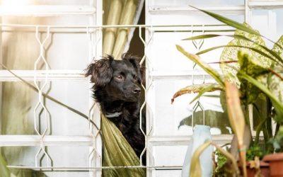 Wat te doen als jouw hond verlatingsangst heeft en hyper-attached is aan jou?