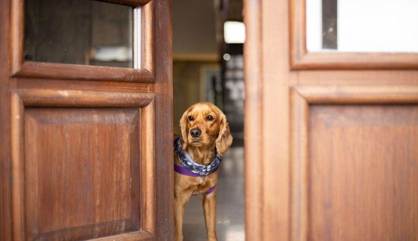 Verlatingsangst hond verhelpen